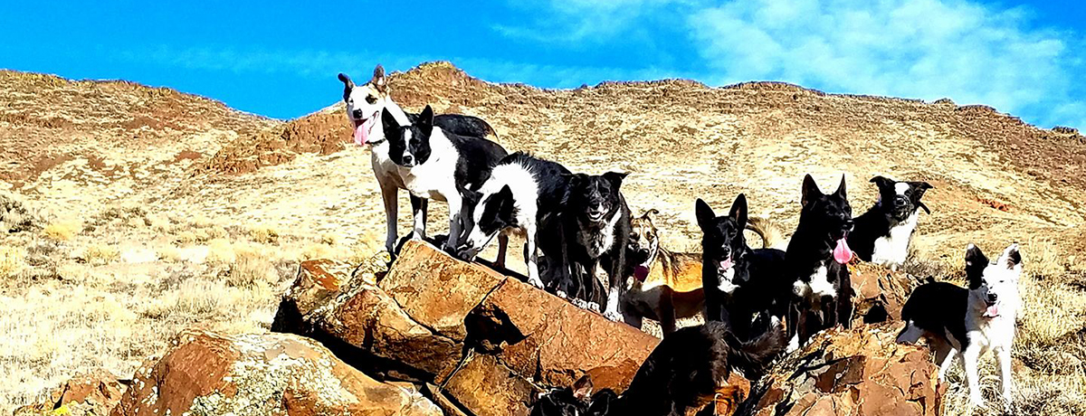 Dogs on Rock